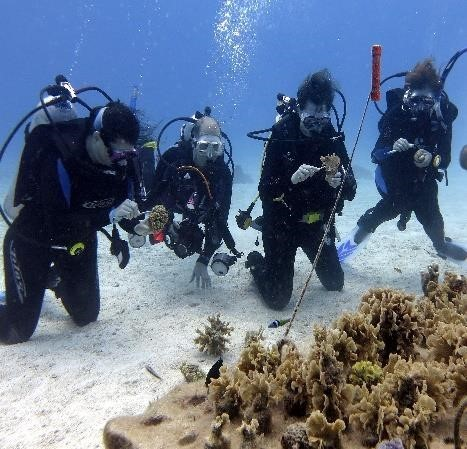 Working on coral farm