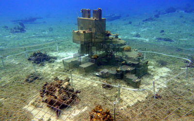 New Cozumel Coral Restoration Project